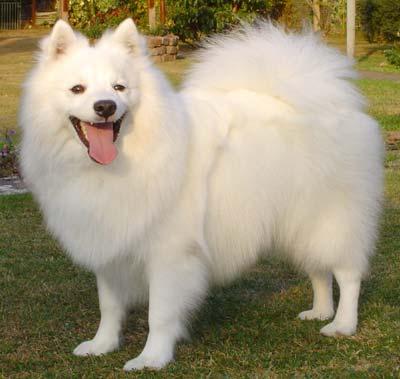 Dog Grooming Reviews Brisbane